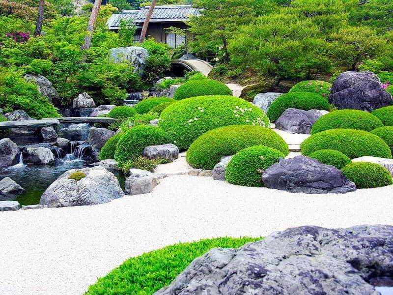 Shrubs in Japanese gardens