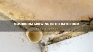 Mushroom growing in the bathroom | How to act?