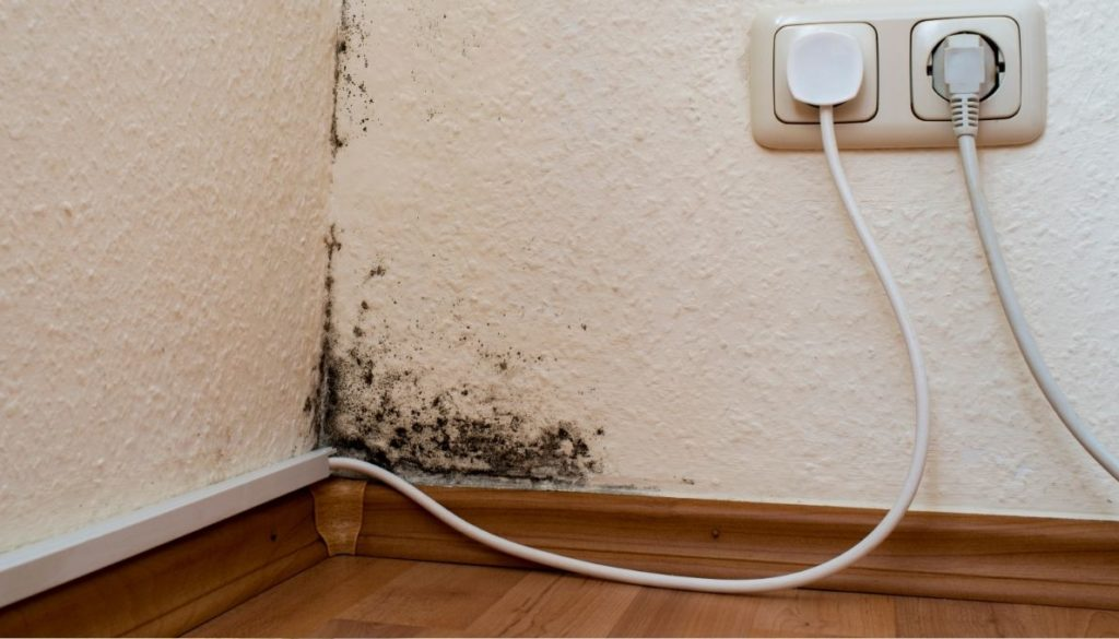 How does black mold look like?