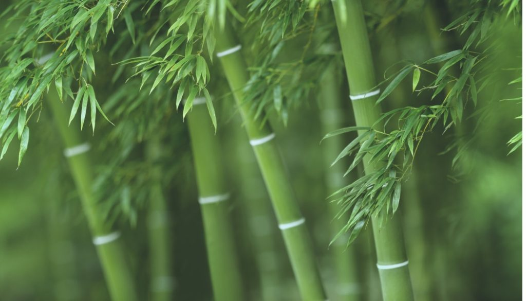 Is Bamboo flooring Eco-Friendly?