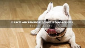 12 Facts Why Bamboo Flooring is Good for Pets